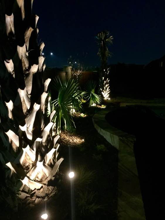 Palm Tree Lighting With Spotlights