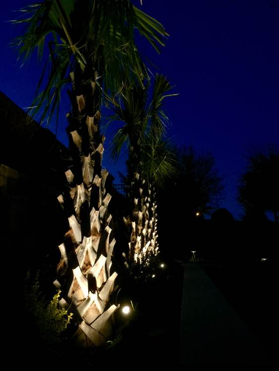 Palm Tree Spotlighting