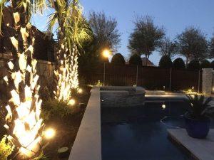 Palm Tree Spotlighting