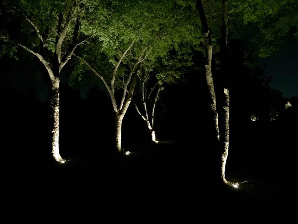 Tree Lighting With Spotlights