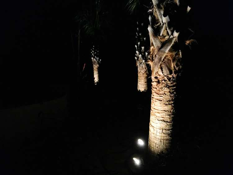 Palm Tree Lighting