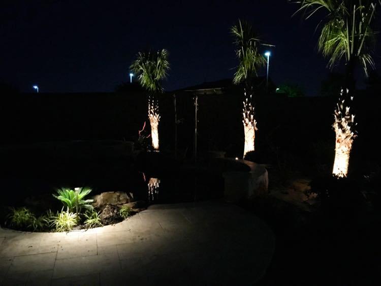 Palm Tree Lighting and Path Lights