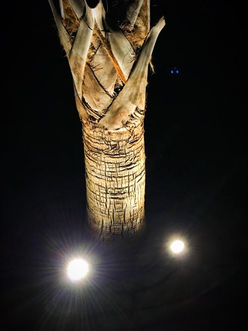 Two Spotlights on Palm Tree