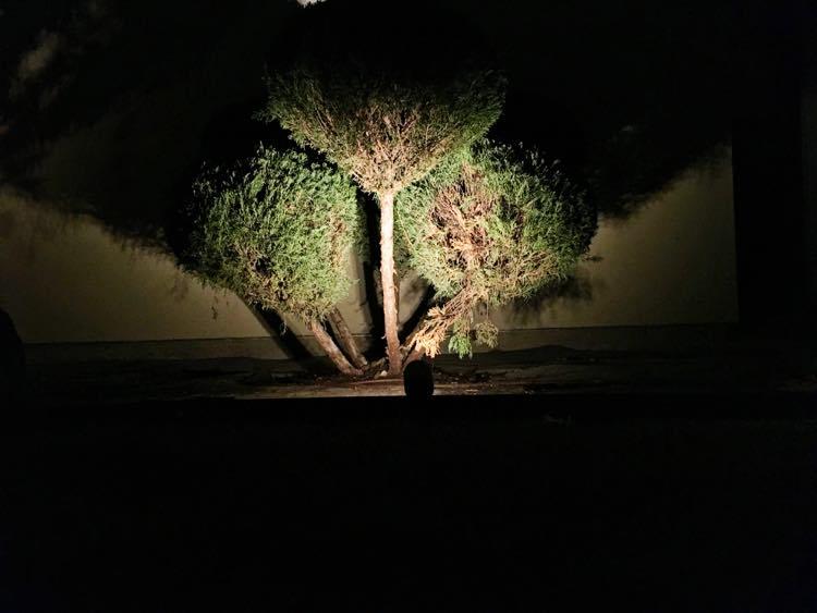 Spot Light on Bush