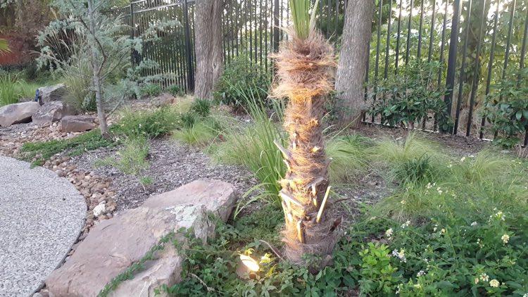 spotlight on tree