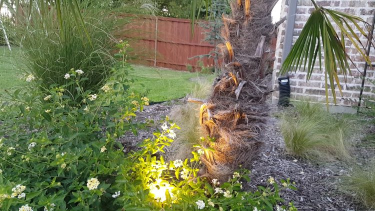 spot light on tree and garden