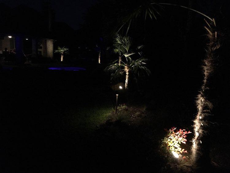 spotlighting on trees